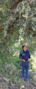 オリーブと栽培者