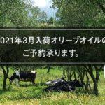 "<span class=""title"">2021年3月入荷、イタリア・カンパニア州産オリーブオイルのご予約承ります。事前予約5%OFF!</span>"